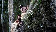 【深度】你是否已经忘记了亚马孙雨林?