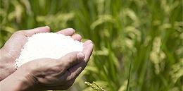 直通部委   農業農村部:中國成功解決14億人的吃飯問題 最高法:嚴懲故意高空拋物
