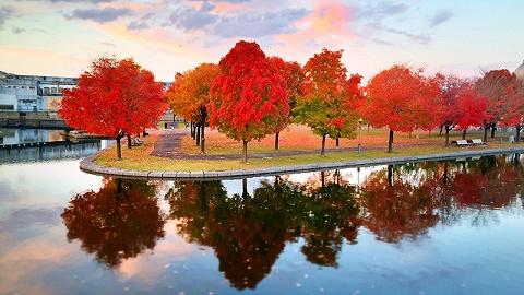 """如果有""""诗和远方"""",那一定在加拿大的秋天"""