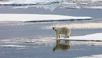 美退出《巴黎协定》,诺奖得主诺德豪斯:全球变暖应与暴力冲突、经济萧条等同视之