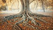 树有树权,河有河权:生灵主义回潮?