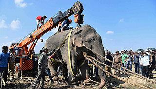 摄影师因拍摄象群被大象踩死