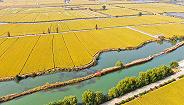 从南京样本看都市农业与乡村振兴
