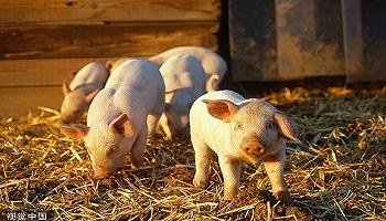 生猪产业发展指数来了!界面商学院联合<strong>新濠天地官网娱乐</strong>农科院编制
