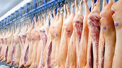 农村农业部:12月生猪出栏量大涨14%,春节吃肉无忧