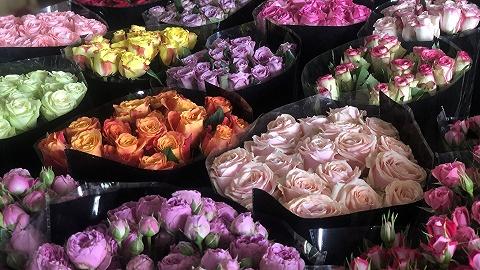 百萬支鮮花被銷毀,這個情人節云南花農平均損失過萬