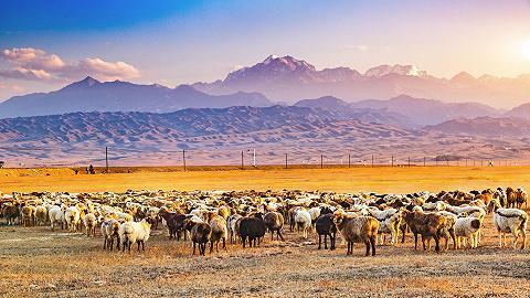 畜牧产业扶贫迎重大利好,养殖板块大涨