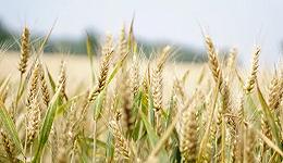 如何把握未来农业创业机遇?