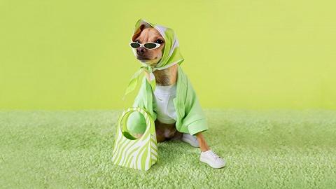 """这个时尚品牌的创始""""人""""是一只狗"""