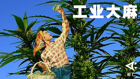 大麻,只是一种毒品吗?