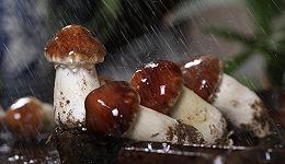 从蘑菇里思考人生:与麻烦同在,与同伴共行
