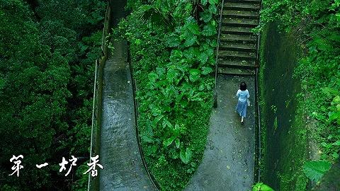 【东京电影节】《第一炉香》:妥协换不来佳作,即便许鞍华也一样