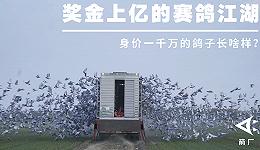 奖金上亿的赛鸽江湖 :身价一千万的鸽子长啥样?