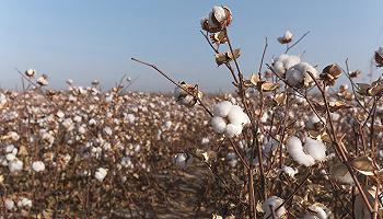 H&M抵制新疆棉花背后:供应链主导权、定价权与标准的争夺