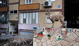 投喂难禁,小兽进城:住在城市的我们要如何与动物共生共存?| 世界地球日