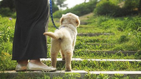 5月起这些新规将影响你的生活:遛狗不牵绳将违法