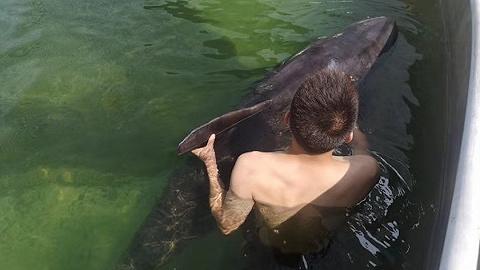12头瓜头鲸搁浅台州,上海救援专家:最后一头正全力救治中