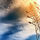 重组西电、许继和平高,澳门金沙信誉将诞生千亿级电力装备集团