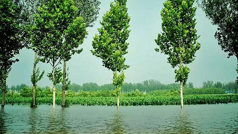 农业农村部:河南洪灾对我国粮食生产供给全局影响较为有限