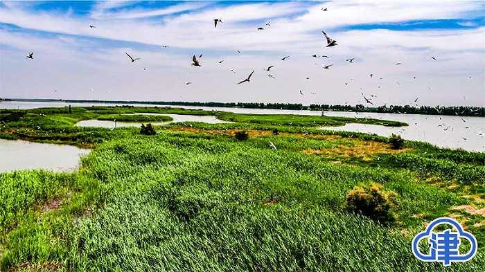 华信娱乐代理七里海生机勃勃:植物种类达160多种 鸟类品种累计增加到258种