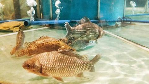 全国渔业扶贫产销对接活动在广东珠海启动