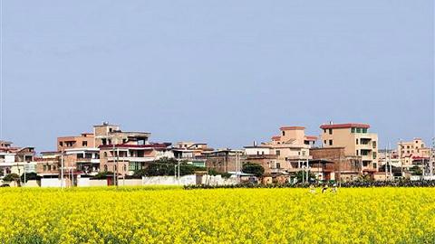 广州173个乡村振兴合作项目面向全国推出