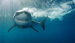 鲨鱼是如何被人类误解的?