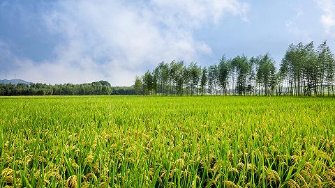 山东潍坊峡山区:绿色发展激活生态经济