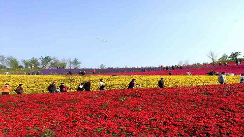 春节假期陕西省商品市场供需两旺,文旅活动精彩纷呈