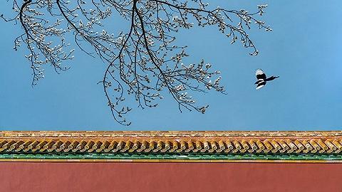 青岛文旅再添新名片,阿朵小镇打造中国文旅小镇标杆